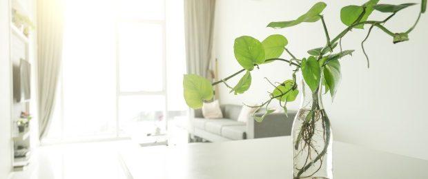 living room green